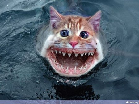 кот акула
