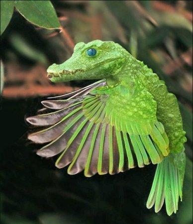 крокодил попугай