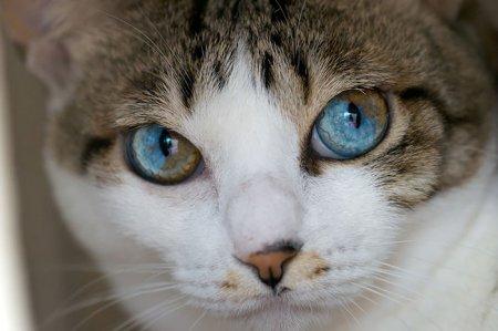 яркие глазки