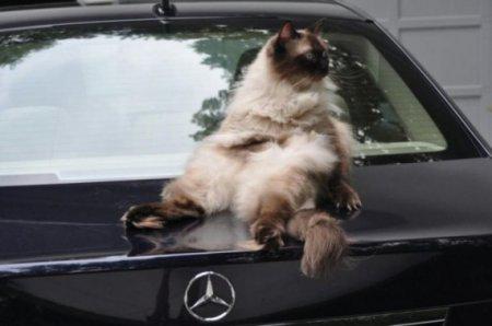 владелец авто