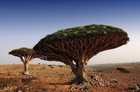 дерево гриб