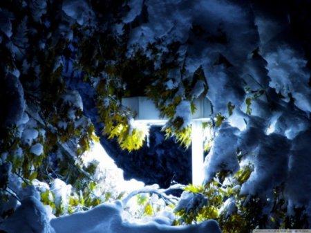 снег на листьях