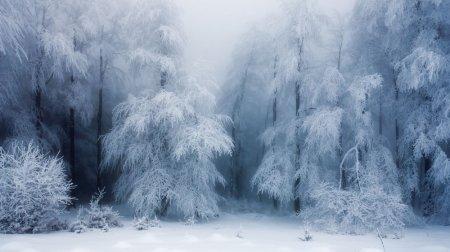 снежный туман