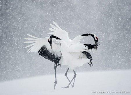 танец птиц