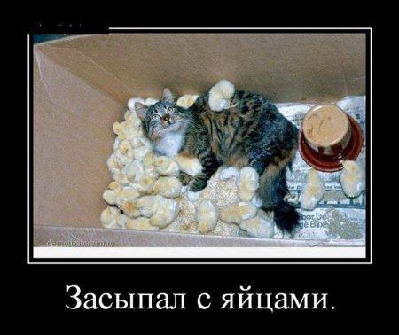 засыпал с яйцами