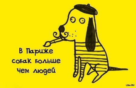 собак больше