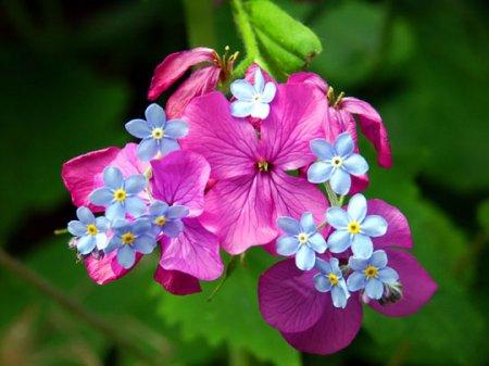 цветочный микс