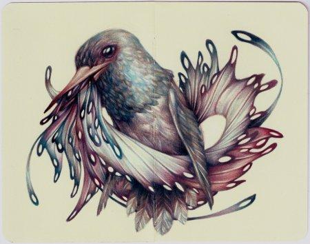 Птица с красивыми перьями