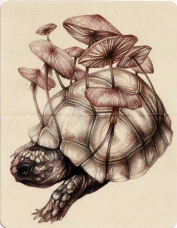 Черепаха с грибами