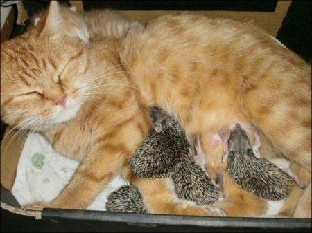 Кот и ежата