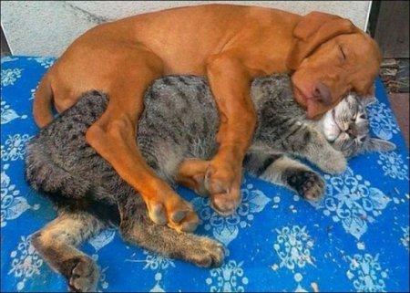 Собачка и кот