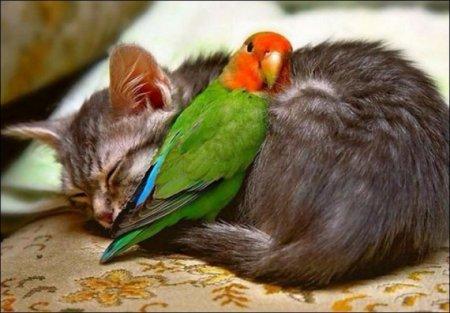 Попугай и котик