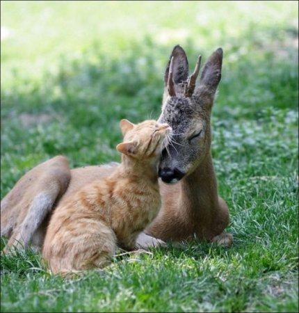 Кот и олень
