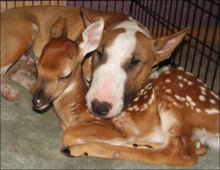 Собака и олень