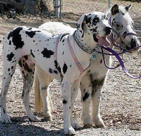 Собака и пони