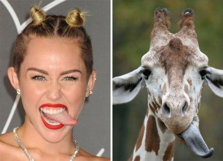Жираф и Майли Сайрус