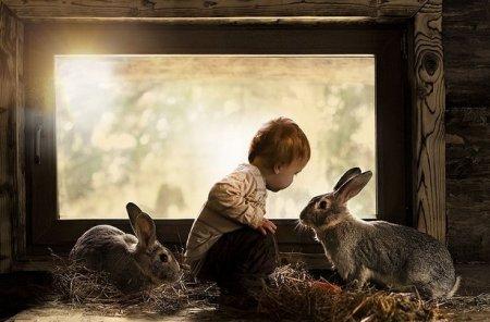 мальчик и кролики