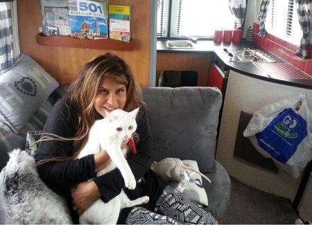 кошка в доме на колесах