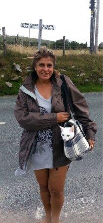 кошка путешествует в сумке
