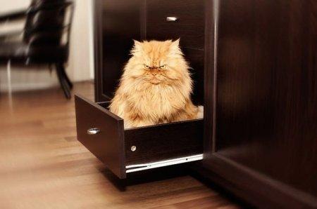 злобный кот фото 9
