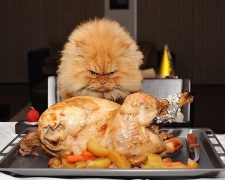 злобный кот фото 1
