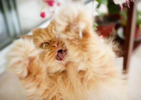 злобный кот фото 6