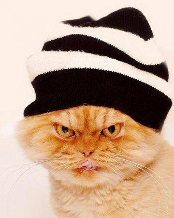 злобный кот фото 10