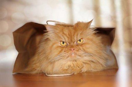 злобный кот фото 5