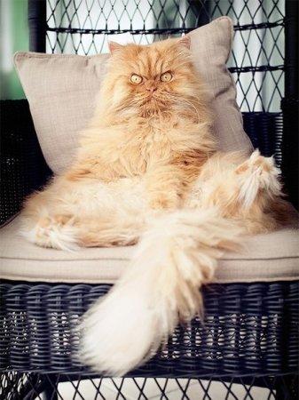 злобный кот фото 2