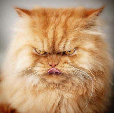 злобный кот фото 4