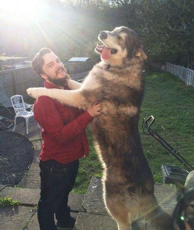 большой пес
