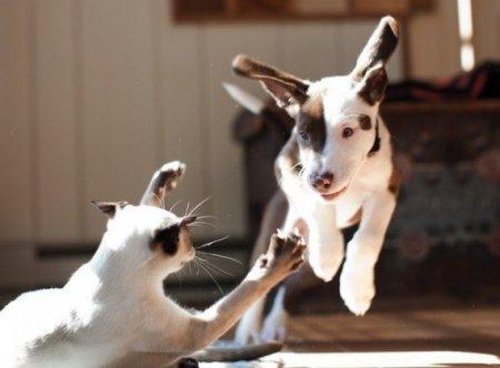 Кошки vs Собаки фото 2