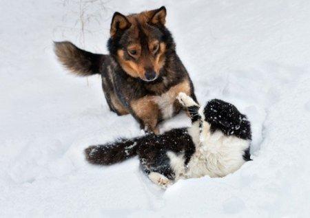 Кошки vs Собаки фото 7
