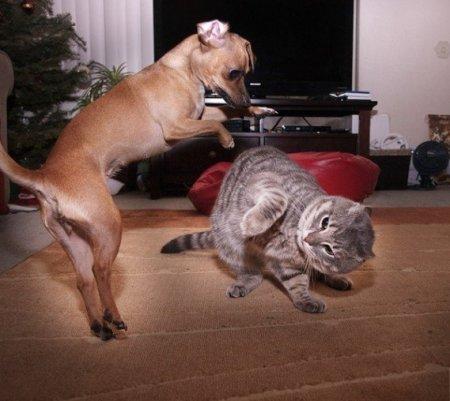 Кошки vs Собаки фото 8