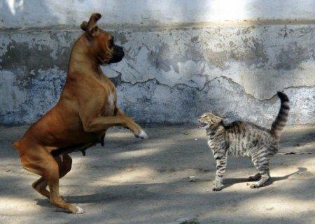 Кошки vs Собаки фото 9