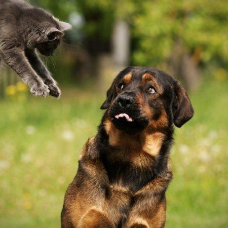 Кошки vs Собаки фото 4