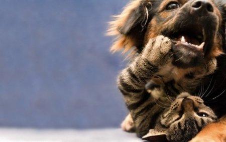 Кошки vs Собаки фото 6