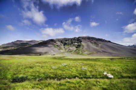 зеленая трава в горах