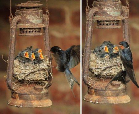 гнездо в старой лампе