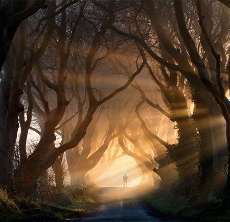 дорога к Долине Королей