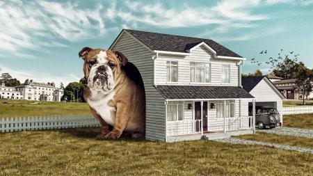 большая собачья будка