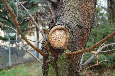 Кружевное дерево