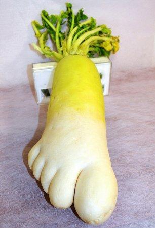 Редька-нога