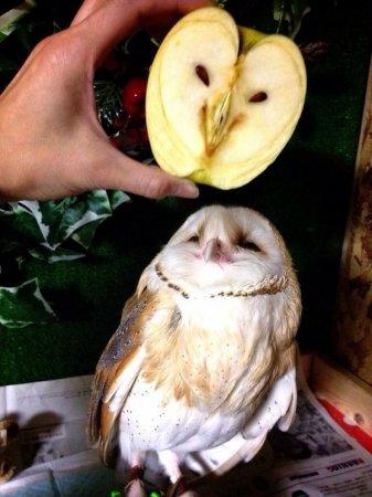 Яблоко-сова
