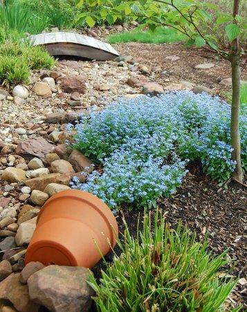голубые цветы в горшке