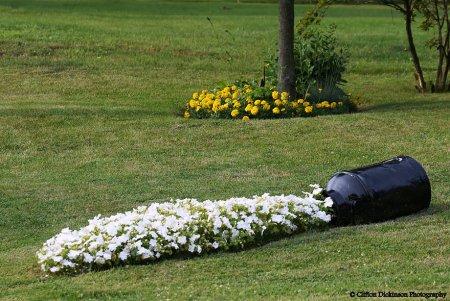 красиво посаженые цветы