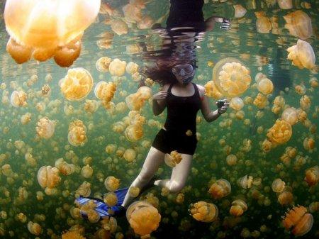 Жёлтые медузы