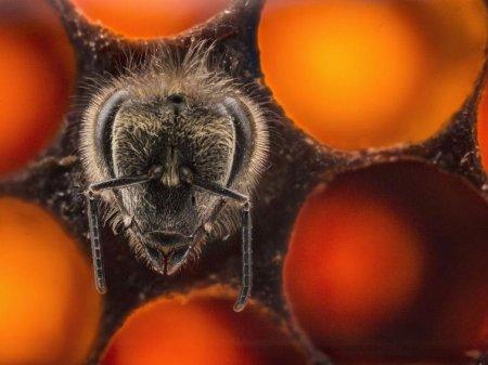 Новая пчела