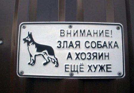 злая собака и хозяин дибил