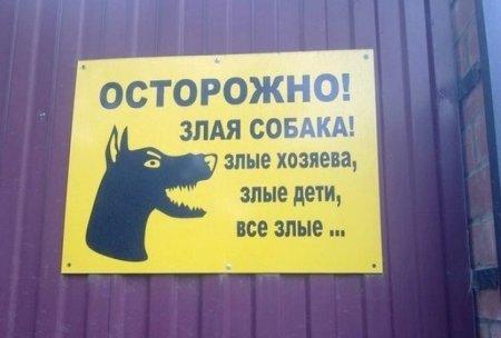 злая собака, злые хозяева и злые дети